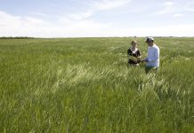 Barley Field with farmers - Courtesy of Syngenta