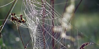 spider-web-1559986-800x450 (Image Credit Freeimages.com/Yvonne Stepanow