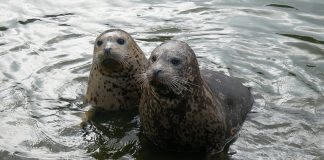 MariaDB gets $9 million and two new board members
