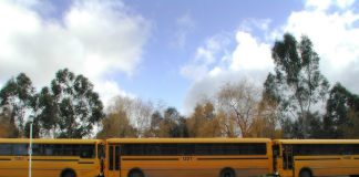 Telstra SDN products, like buses they come in threes (Image Source Freeimages.com/Sasha Davas)