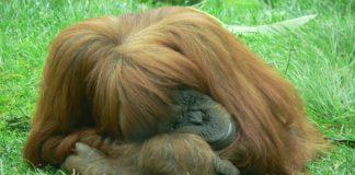 Monkeys Cousin for SAP HANA (Image source : Freeimages.com/Rogelio Garcia