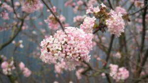 Spring: Image Credit Freeimages.com/Pat Herman