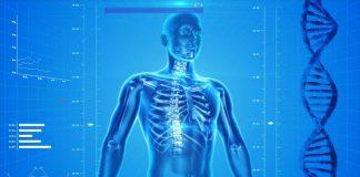 Healthcare Human Skeleton Image credit Pixabay/PublicdomainPictures