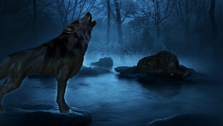 Bluewolf Go - (Image Credit Pixabay/ractapopulous)