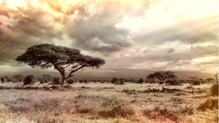 Sage extends cloud over Africa