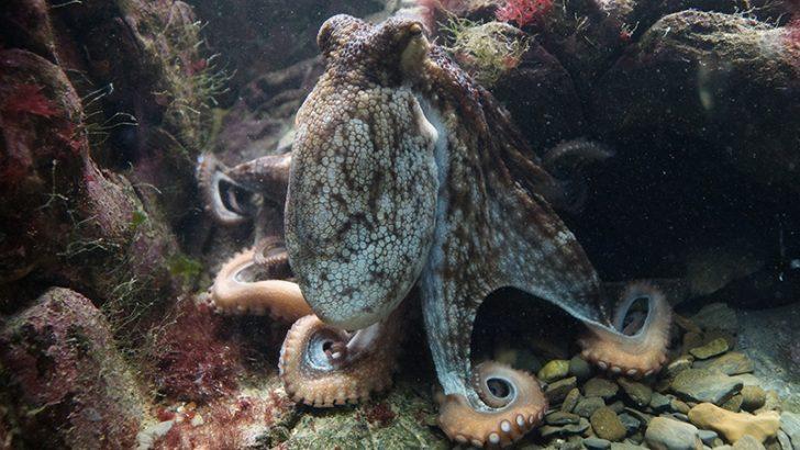 Secret Double Octopus launches Authenticator app