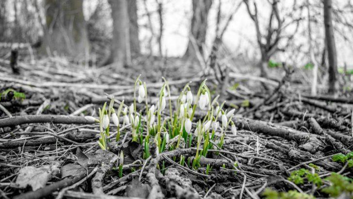Strategies for successful growth (Flowers Image credit Pixabay/Lars Borris
