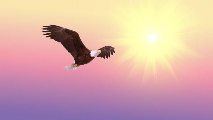 bald-eagle soar (Image credit PIxabay/Flashbuddy)