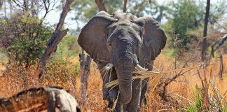 Elephant Image credit pixabay/designerpoint