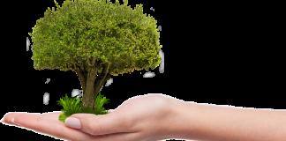 growth Image credit Pixabay/umutavci