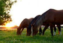 Horses - Source Image: Pixabay.com/lucianomarelli