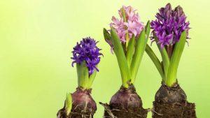 nature growth image credit pixabay/Stux