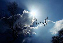 bird cloud silver image credit pixabay/cocoparisienne