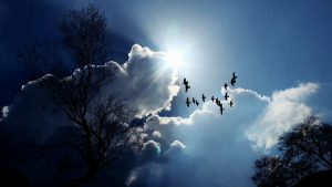 bird cloud silver image credit pixabay/cocoparisienne