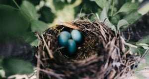 nest of eggs - Image Source: Unsplash.com/Tania Heffner