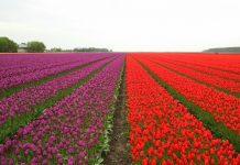 landscapes-in-nederlands : Image Source - Freeimages.com/ Daniel Hanai
