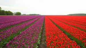 landscapes-in-nederlands : Image Source - Freeimages.com/ Daniel Hanai