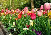 Flower_Border - Iamge Source: Pixabay.com/Mabel Amber
