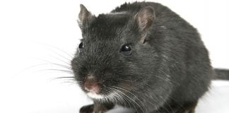 FlawedAmmyy RAT targets users in banks