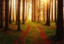Woods path Image credit pixabay/jplenio
