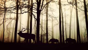 Forest Shadows, Image credit Pixabay/cocoparisienne