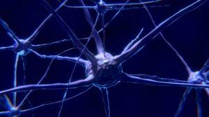 Nerve cell network Image credit pixabay/ColiN00b