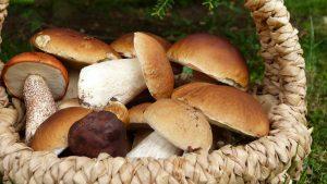 mushroom search - Image Source: Pixabay.com /Silviarita