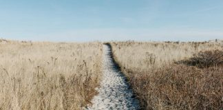 Prairie - Image credit Pixaby/Free-Photos