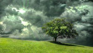 oak cloud Image credit pixbay/Septimiu