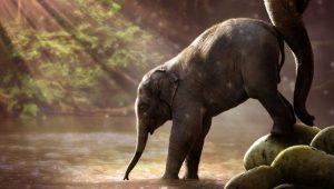 Elephant Nudge Image credit pixabay/cornfreak