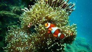 Finding Nemo: Image Credit - pexels.com / Tom Fisk