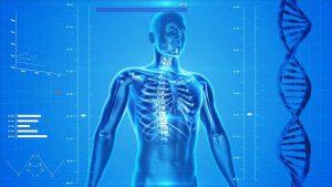 Health Cloud Salesforce Human Skeleton (Image credit/Pixabay/PublicDomainPictures)