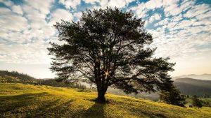 Tree Branch Image credit pixabay/danfador