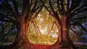 Tree Double image credit pixabay/jplenio