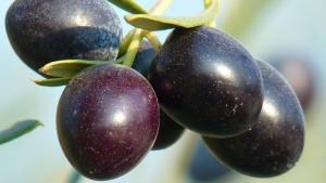 Food Trust - olives