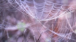 Visma acquires 1stWeb Cobweb Web Image by Pexels from Pixabay