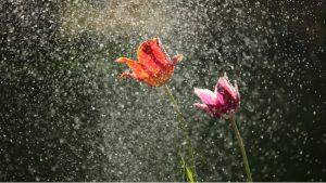 April Rain Photo by michael podger on Unsplash