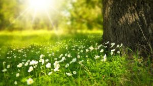 FinancialForce Spring 20 Image by Larisa Koshkina from Pixabay