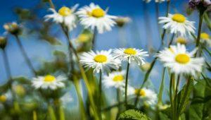 April Spring Image by Christo Anestev from Pixabay