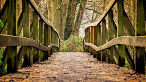 CountingUp Wooden Bridge Image by Peter H from Pixabay
