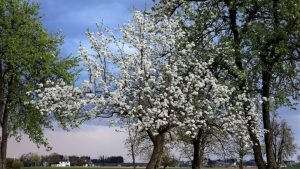 Fruit Tree Blossom April Image by Franz W. from Pixabay