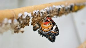 Butterfly KeyedIn Reveal Image by FotoRieth from Pixabay