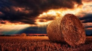 Nature Harvest September Image by My pictures are CC0. When doing composings: from Pixabay