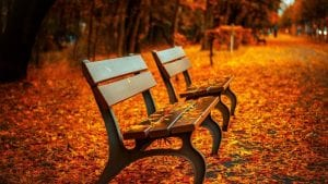 Bench Leave Fall Image by Pepper Mint from Pixabay