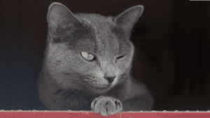 Cat Glimpse Image by husnerova from Pixabay
