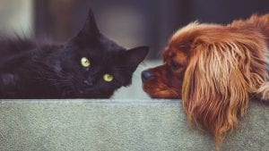 Dog Cat Image by StockSnap from Pixabay