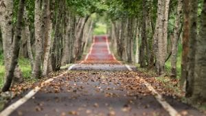 Avenue Image by 二 盧 from Pixabay