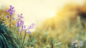 Flowers Sunshine iCIMS Summer Image by jplenio from Pixabay
