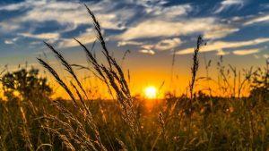 Wheat Summer July Image by FelixMittermeier from Pixabay