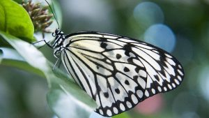 August Butterfly Image by Shoot-It-RAW from Pixabay